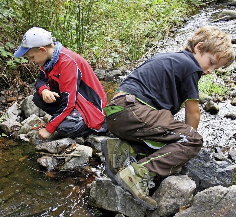 Beim Todtmooser Naturcamp suchten die ..., um diese anschließend zu bestimmen.   | Foto: Andreas Böhm