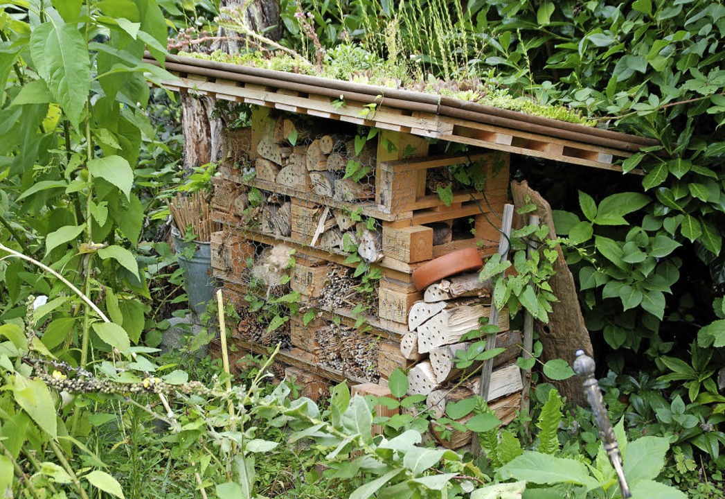 Gut gebucht: Das Insektenhotel im Diakonie-Garten  | Foto: Maja Tolsdorf