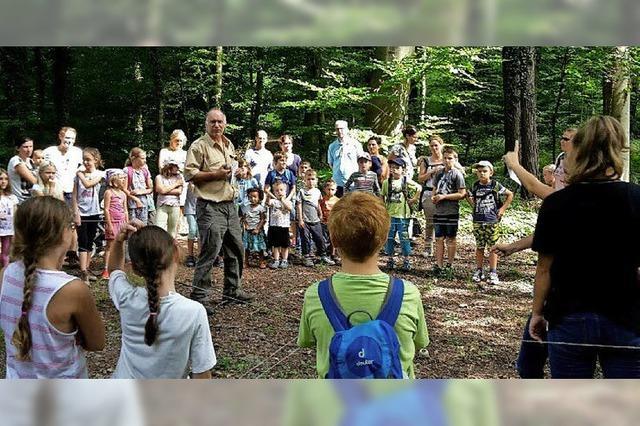 Juniorforscher im Wald