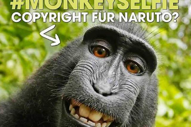 Streit um ein Affen-Selfie: Tierschützer versus Fotograf