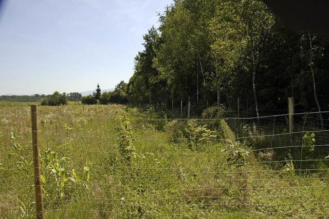 Wald, Wiesen, Wissen und Gesundheit