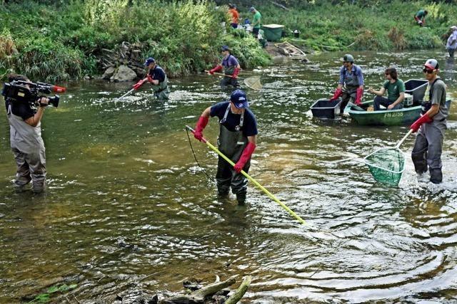 Großangelegte Untersuchung der Fischbestände