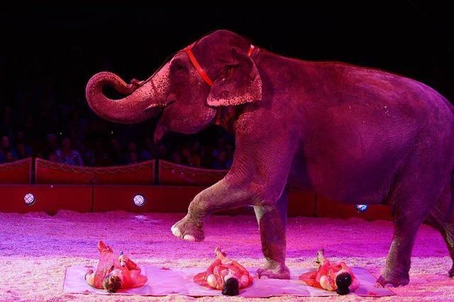 Tierschützer und Zirkusse im Glaubenskampf