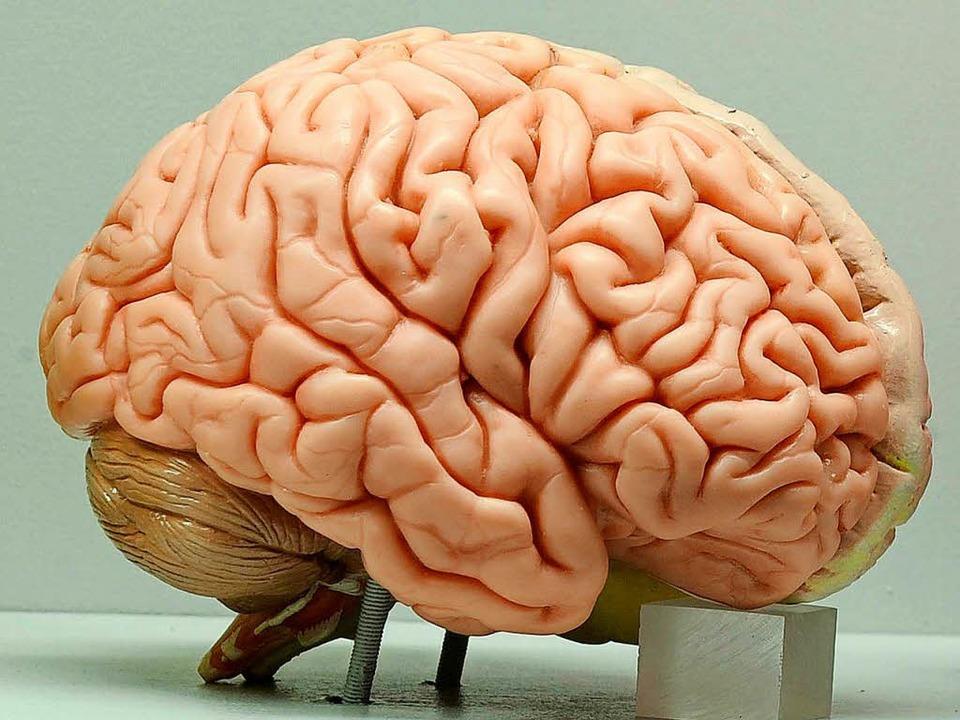Das Hirn hat seinen Code noch nicht verraten.  | Foto: Ingo Wagner