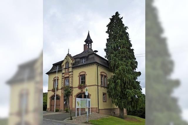 100 Jahre alter Rathausbaum wird gefällt