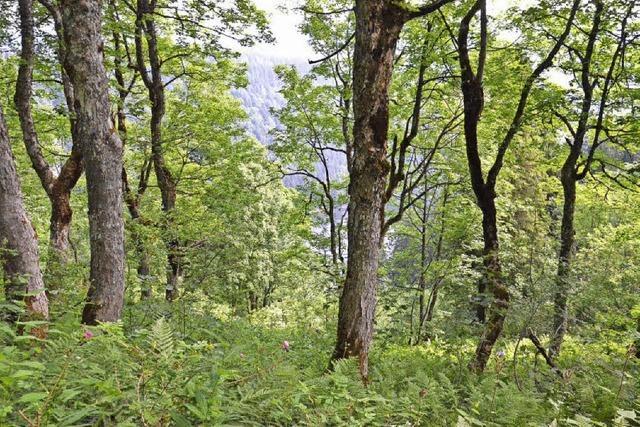 Mit dem Feldberg-Ranger auf der Suche nach seltenen Pflanzen und Tieren am Feldberg
