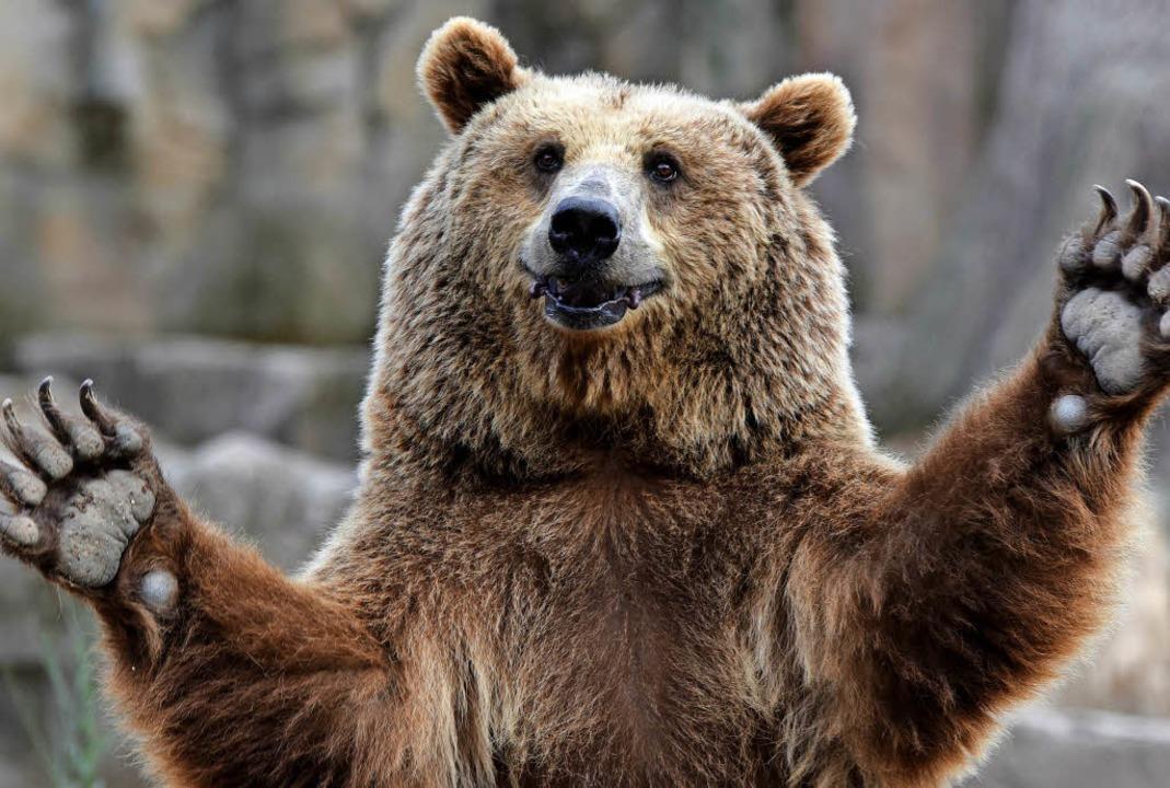 Braunbär im Zoo von Madrid  | Foto: dpa