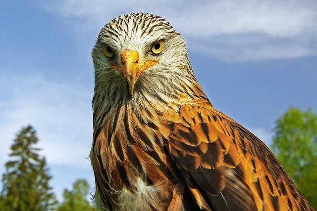 Vogelschützer bezweifeln Windkraft-Gutachten in Schopfheim