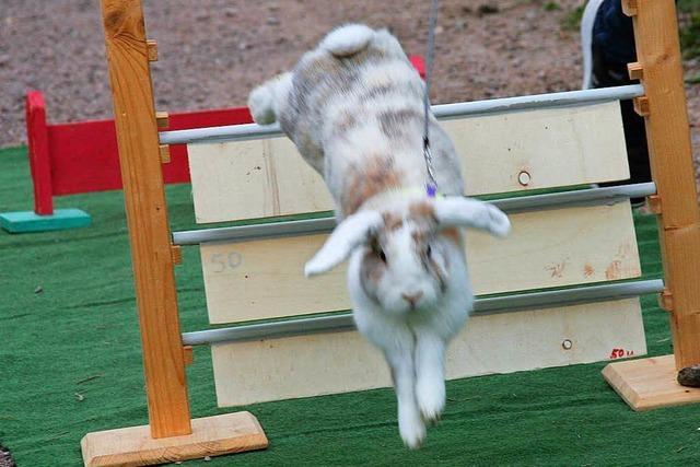 Ein Maulburger bringt Kaninchen zum Springen
