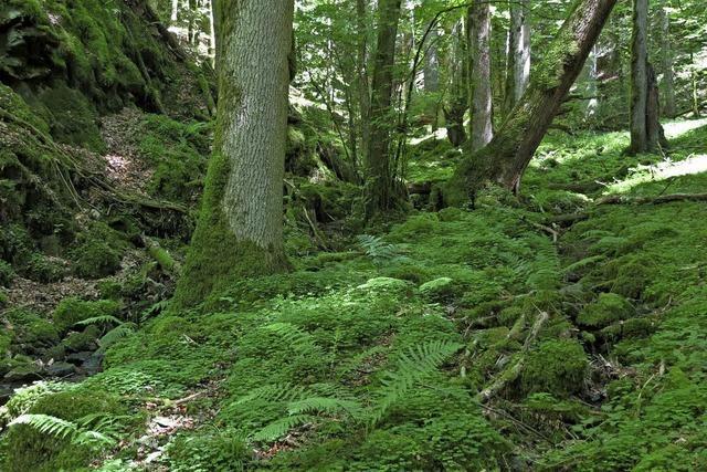 Rückzugsorte für den Artenschutz