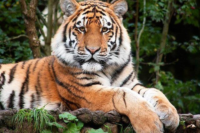 Neuer Besitzer des Schwarzwaldparks investiert zweistelligen Millionenbetrag