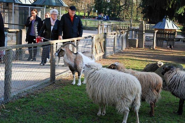 Stadt Lörrach: Tiere sollen im Rosenfelspark bleiben