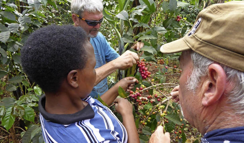 Bei der Kaffeeernte in Uganda  | Foto: Privat