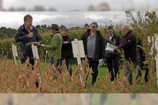 Die Gefahr für den Mais wächst wieder