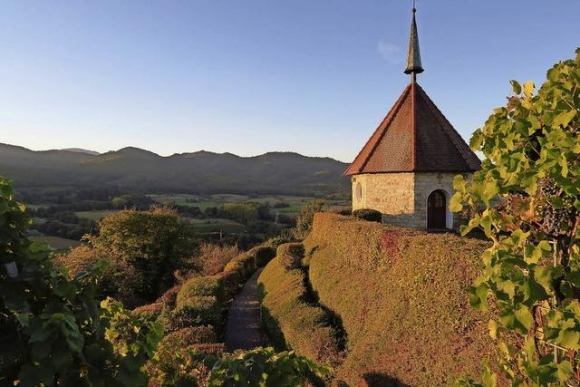Reben und Steinzeit in Ehrenstetten