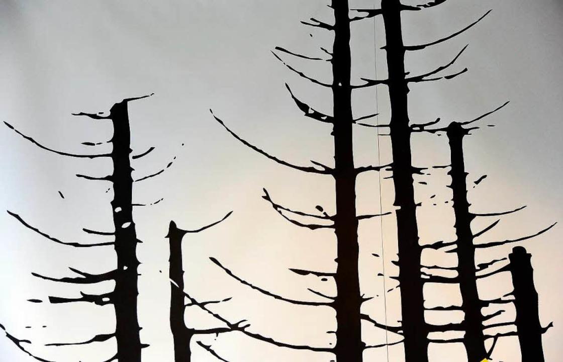 Sterbende Bäume  | Foto: Ingo Schneider