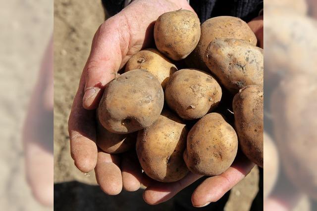 Herbstfest dreht sich rund um die Kartoffel