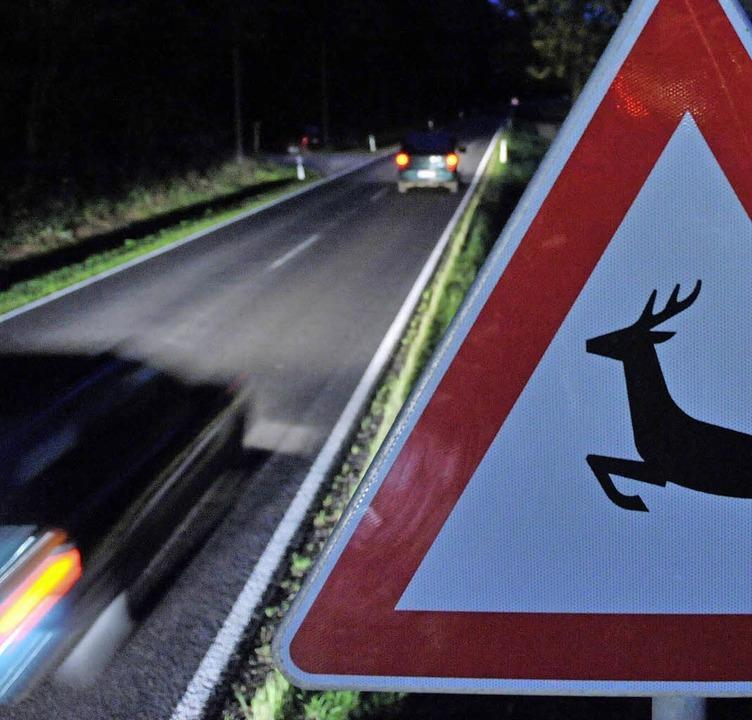 Wildwechsel: Im Herbst ist diese Gefahr groß.     Foto: dpa