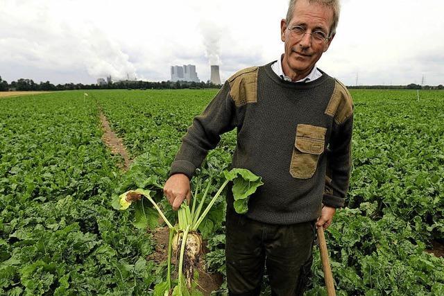 Die Zucker-Planwirtschaft geht zu Ende