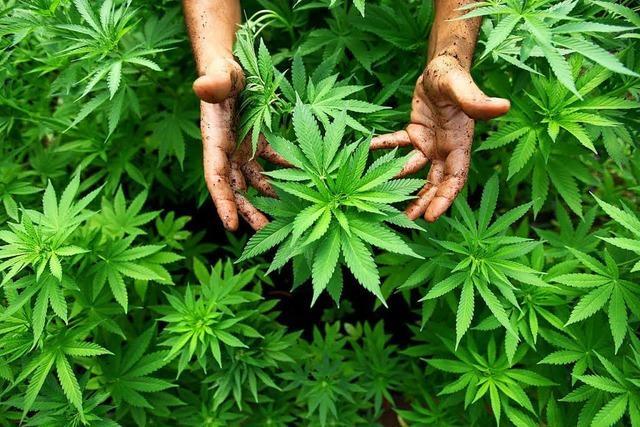 400 Gramm Marihuana im Rucksack