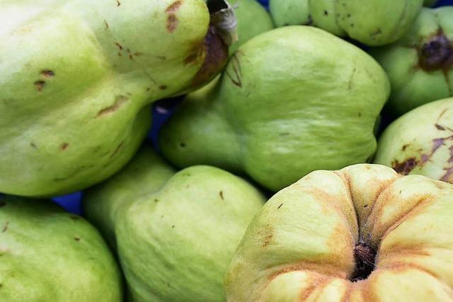 Unbekannter stiehlt 50 Kilogramm Quitten