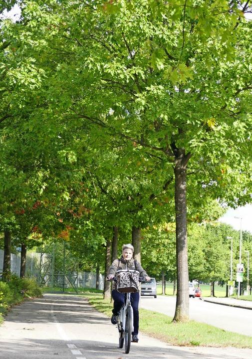 Die Roteichen der Mouscron-Allee müsse...aub, Verkehr. Noch stehen sie gut da.   | Foto: Ingrid Böhm-Jacob