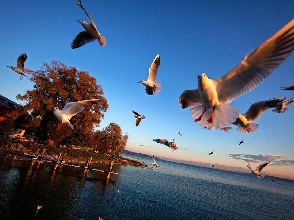 Möwen im milden Abendlicht: Der Bodens... auch im Herbst seine besonderen Reize  | Foto: dpa-tmn