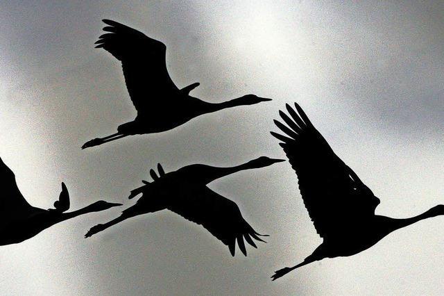 Beobachtung des herbstlichen Vogelzugs
