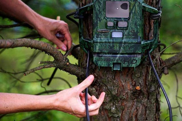 Hat die Stadt Titisee-Neustadt den Bauhof illegal per Videokamera überwacht?