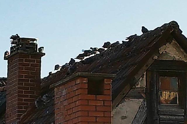 Taubendreck sorgt in Löffingen für Ärger