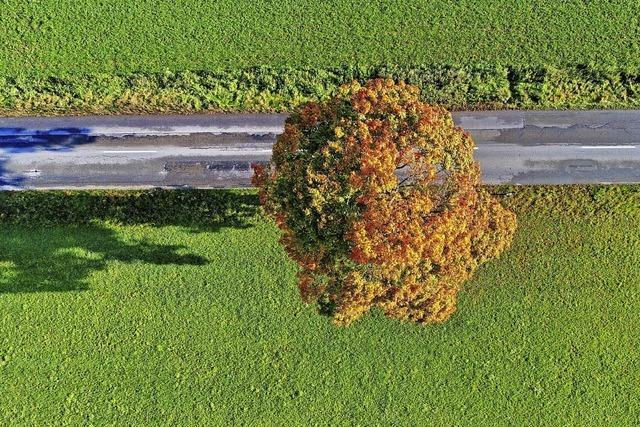 Herbstbild gesucht!