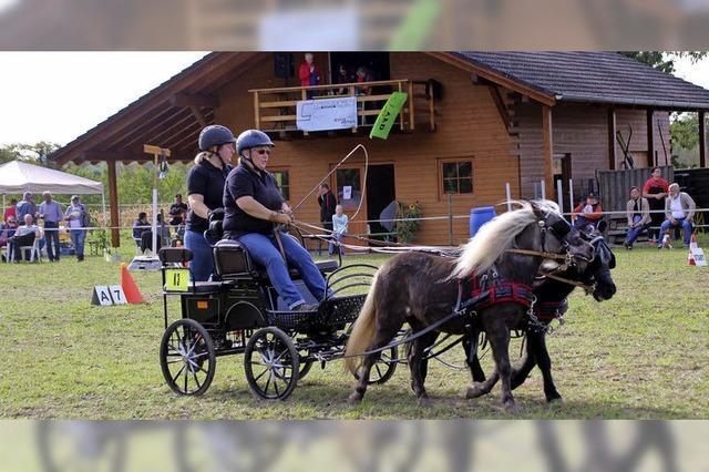 Ein Fest für Pferdefreunde