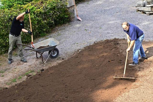 Der Glanz kehrt in den Sanagarten zurück