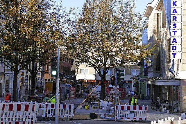 Zukunft der Bäume offen