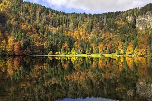 So bunt treibt's der Herbst