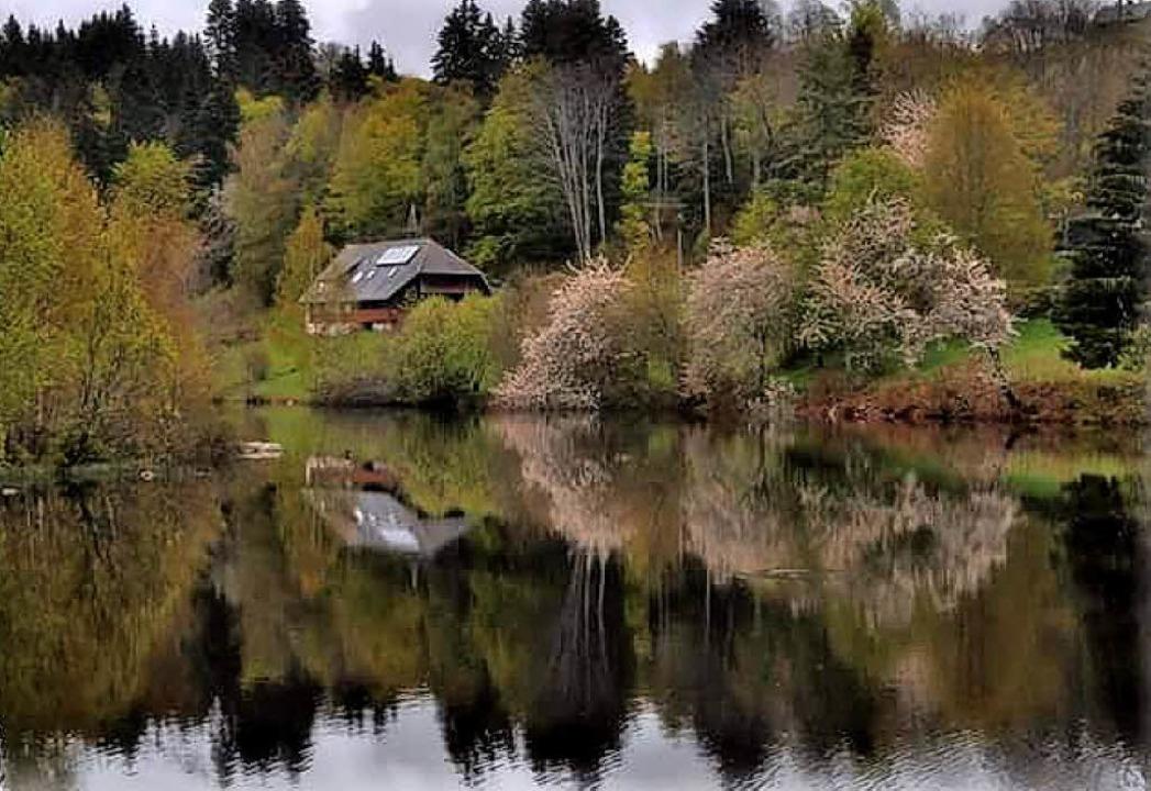 Herrlich Spiegelungen kann man am Klosterweiher in Dachsberg beobachten.    Foto: Mike R. Mike
