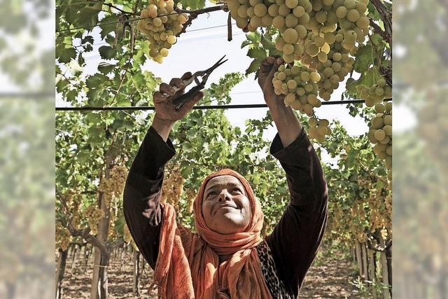 Tunesien hat eine Winzerkultur, die bis in die Antike zurückreicht