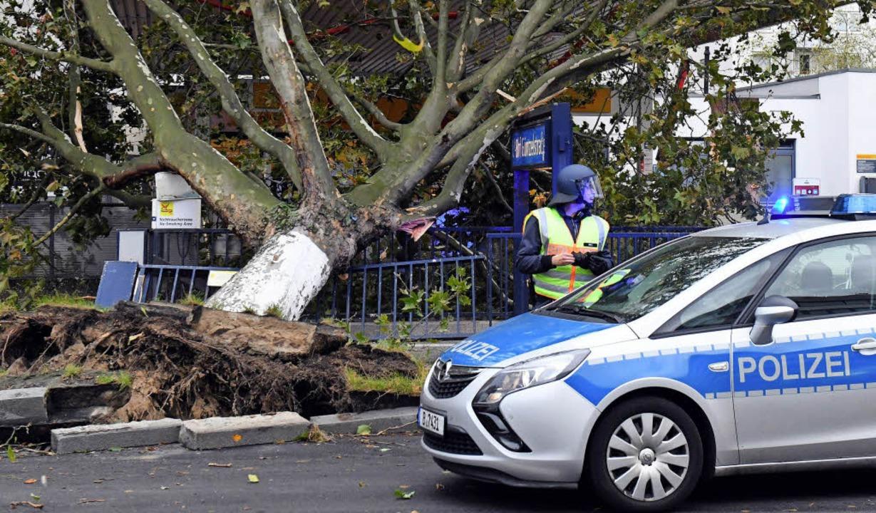 Ein Baum ist in Berlin auf den Eingang einer U-Bahnstation gestürzt.   | Foto: DPA