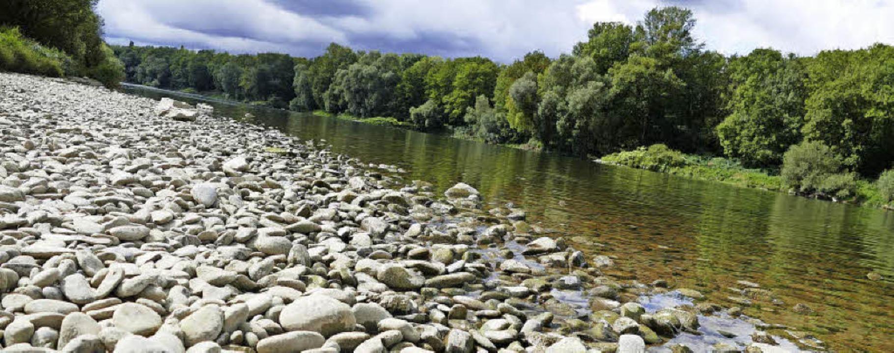 Der Altrhein an der Nato-Rampe bei Neu...Grißheim führt nur noch wenig Wasser.   | Foto: Jonas Hirt