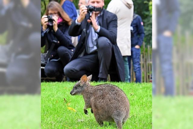 Begegnung im Zoo
