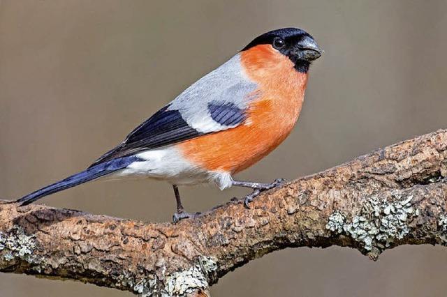Vogelkundliche Wanderung am Feldberg