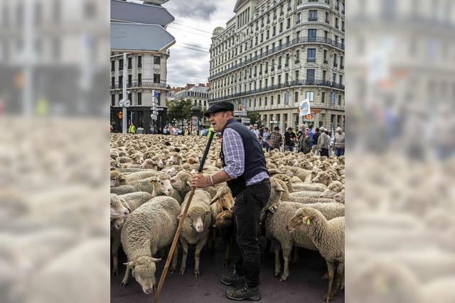 Protest mit Schafen