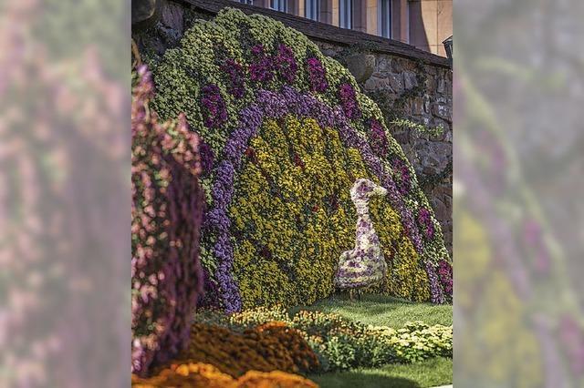 20 Jahre Chrysanthema Lahr