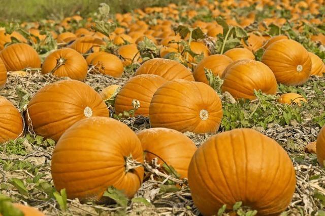 Herbstliches Orange