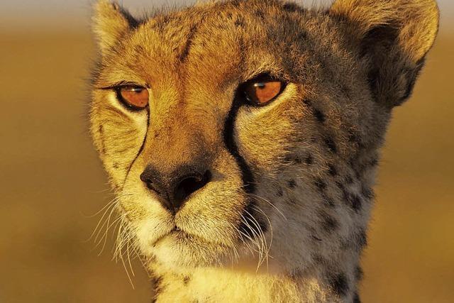 Mutterglück einer Wildkatze