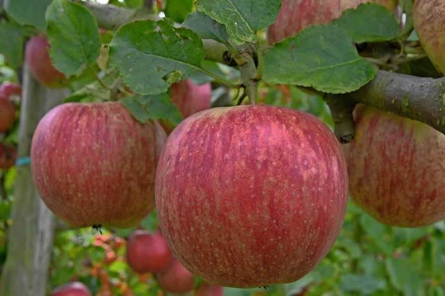 Der Apfel ist der Star des Tages