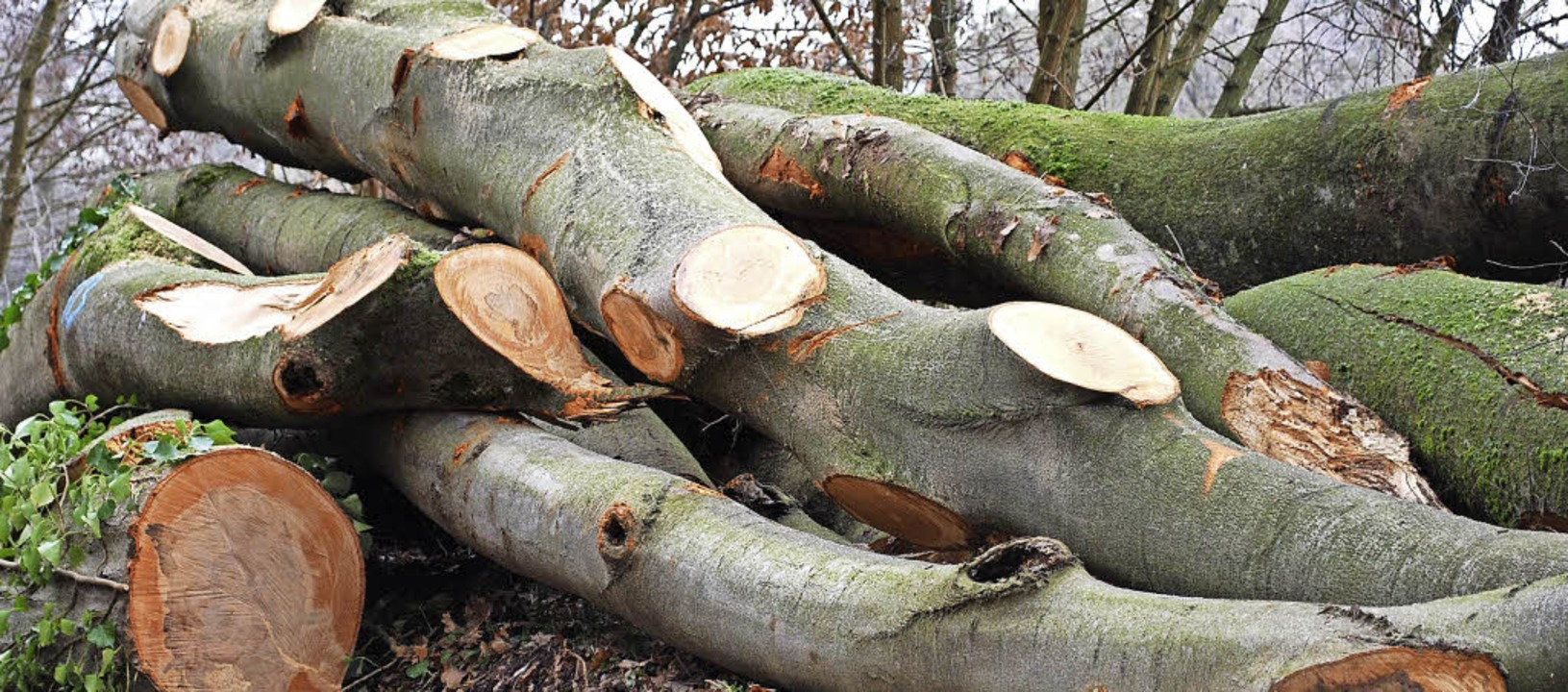 Der Holzmarkt ist gut für Anbieter und...8211; für Aufräumholz gilt das nicht.     Foto: Jahn