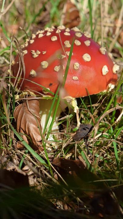 Auch um das Thema Pilze – auf de...gleitheft  der Kinderuni vorgestellt.   | Foto: Krug/Leutenecker