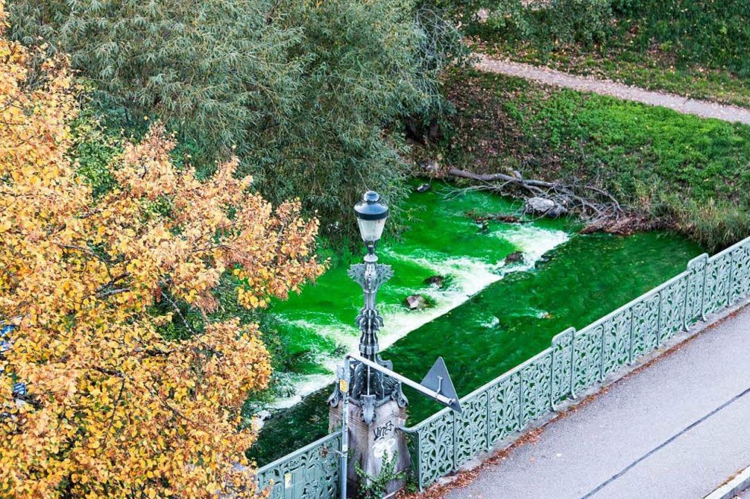 Knallig grün sah die Dreisam am Samsta...santen und Anwohner rätselten, warum.     Foto: peter schmidt