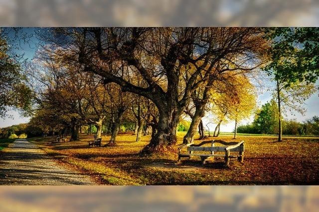 Goldener Herbst auf dem Tüllinger